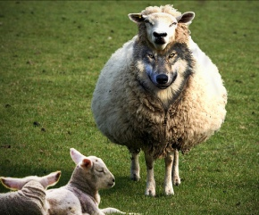 Beware Neocons in Sheeps' Clothing